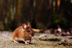 Cum scapam de problemele daunatorilor animali